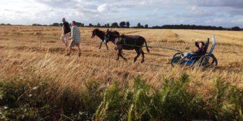 Randonnée pédestre avec âne baté ou attelé avec un cariâne