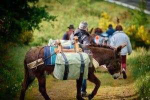 Randonnée avec un âne bâté