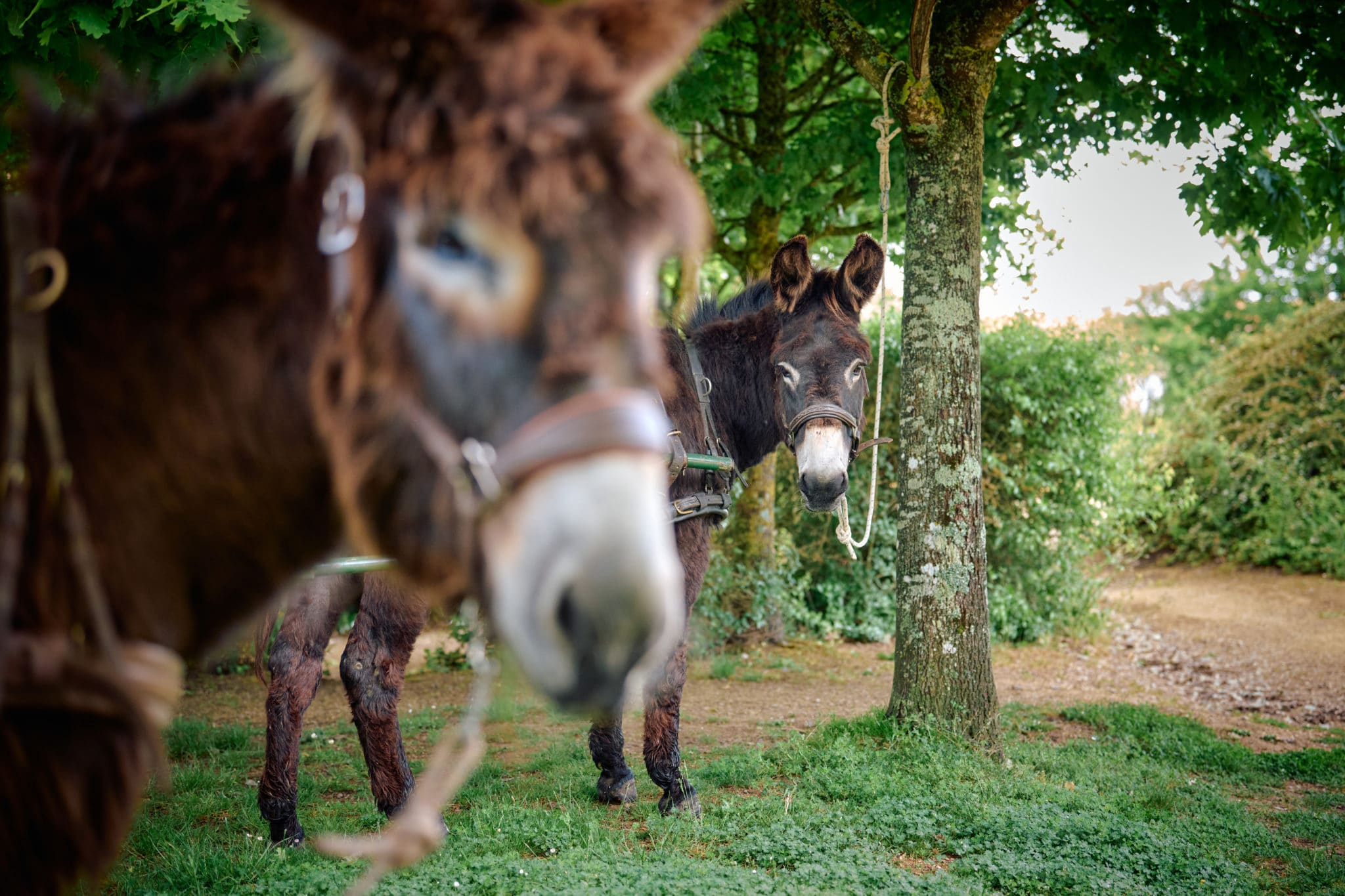 ânes Gaspard et Filou